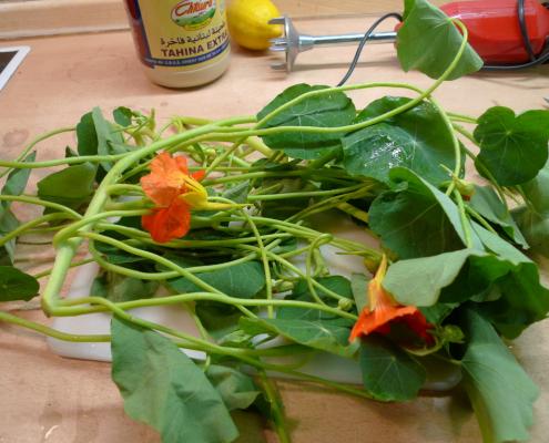 Pesto z lichořeřisnice