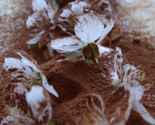 Palačinky zdobené květy třešní a sypané kakaem