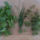 Těstovinový salát s jarními bylinami
