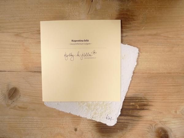 Ruční papír velký se semínky kopretiny bílé