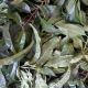 Likér z broskvových listů